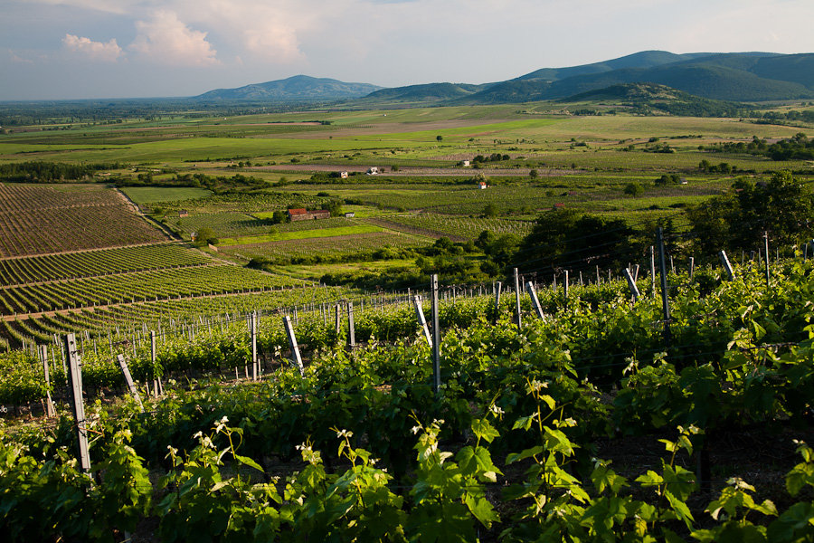 View_from_Budahazi_vineyard